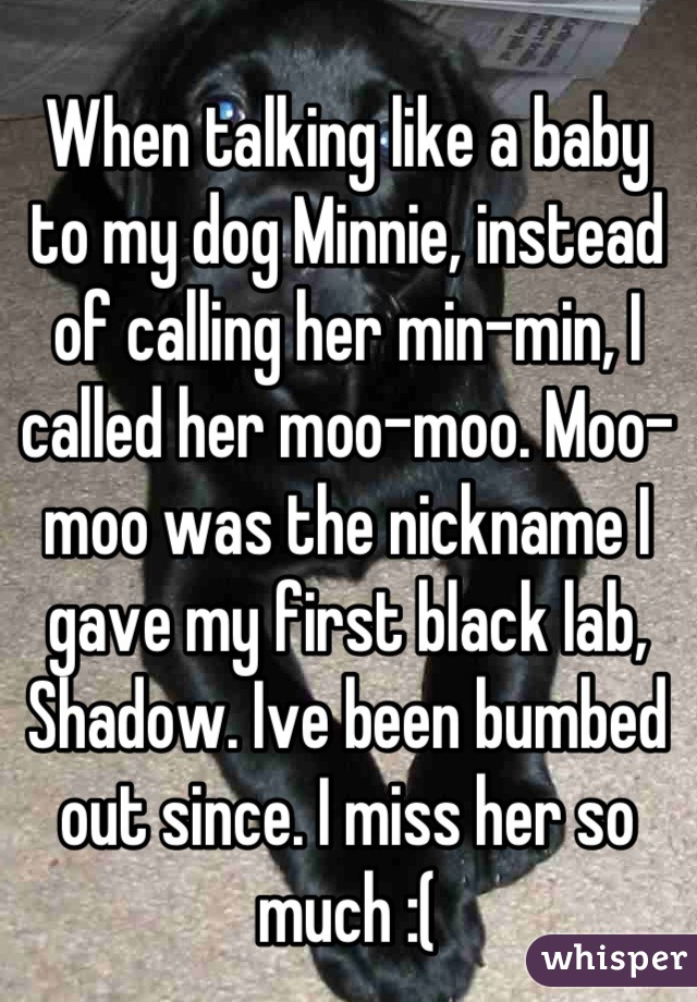 When talking like a baby to my dog Minnie, instead of calling her min-min, I called her moo-moo. Moo-moo was the nickname I gave my first black lab, Shadow. Ive been bumbed out since. I miss her so much :(