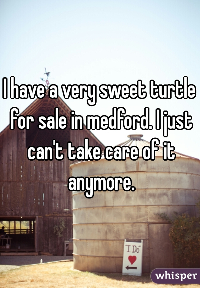 I have a very sweet turtle for sale in medford. I just can't take care of it anymore.