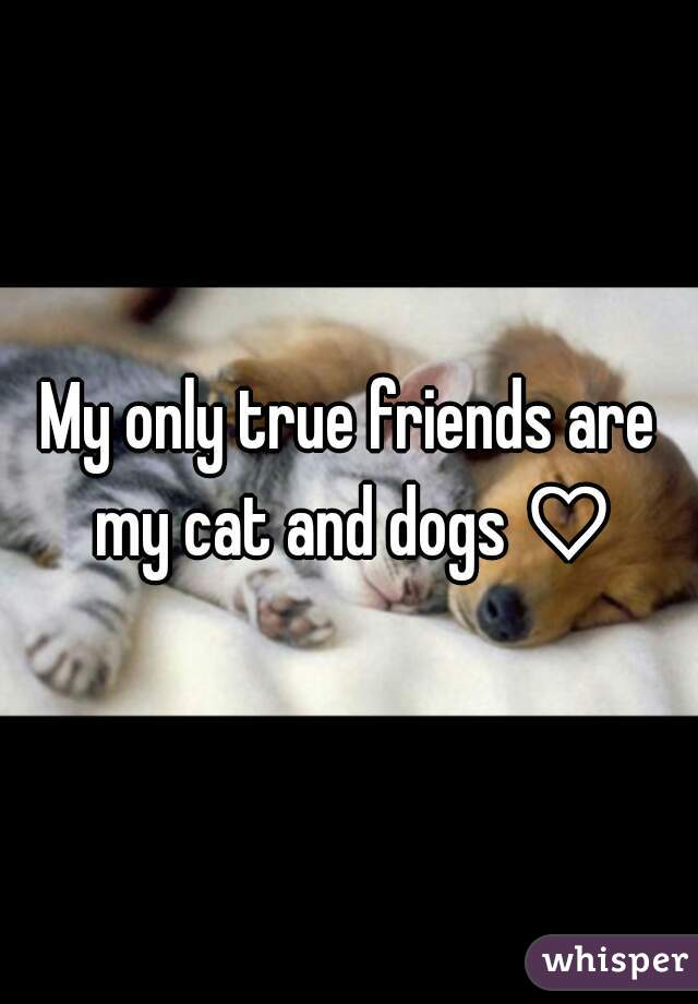 My only true friends are my cat and dogs ♡