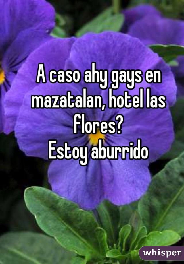 A caso ahy gays en mazatalan, hotel las flores? Estoy aburrido
