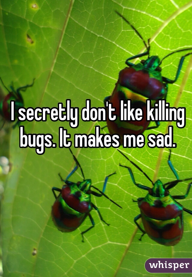 I secretly don't like killing bugs. It makes me sad.