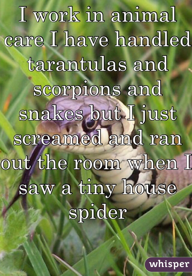 I work in animal care I have handled tarantulas and scorpions and snakes but I just screamed and ran out the room when I saw a tiny house spider