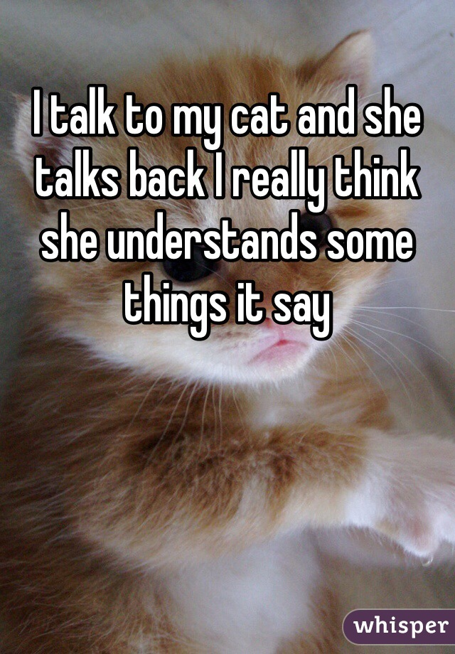 I talk to my cat and she talks back I really think she understands some things it say