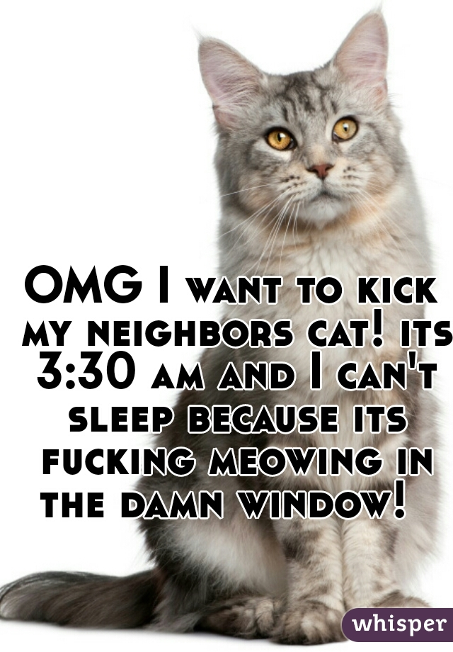 OMG I want to kick my neighbors cat! its 3:30 am and I can't sleep because its fucking meowing in the damn window!