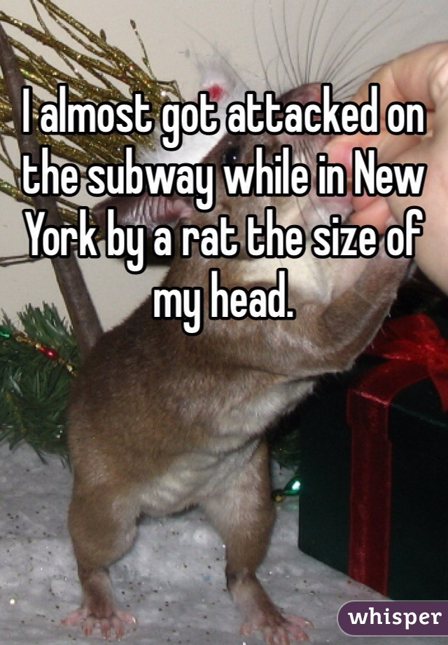 I almost got attacked on the subway while in New York by a rat the size of my head.