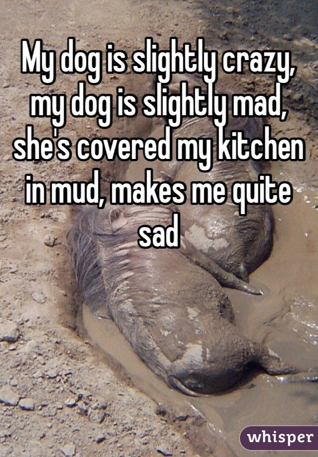 My dog is slightly crazy, my dog is slightly mad, she's covered my kitchen in mud, makes me quite sad