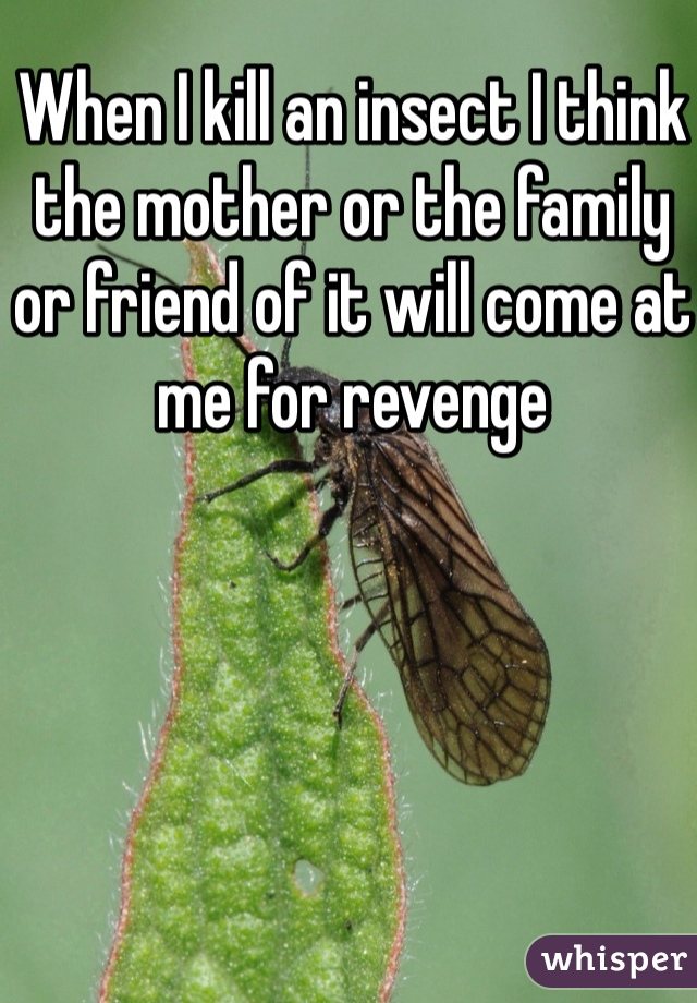 When I kill an insect I think the mother or the family or friend of it will come at me for revenge