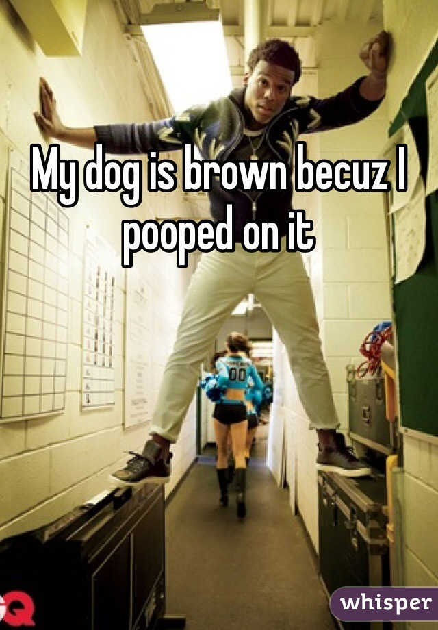 My dog is brown becuz I pooped on it
