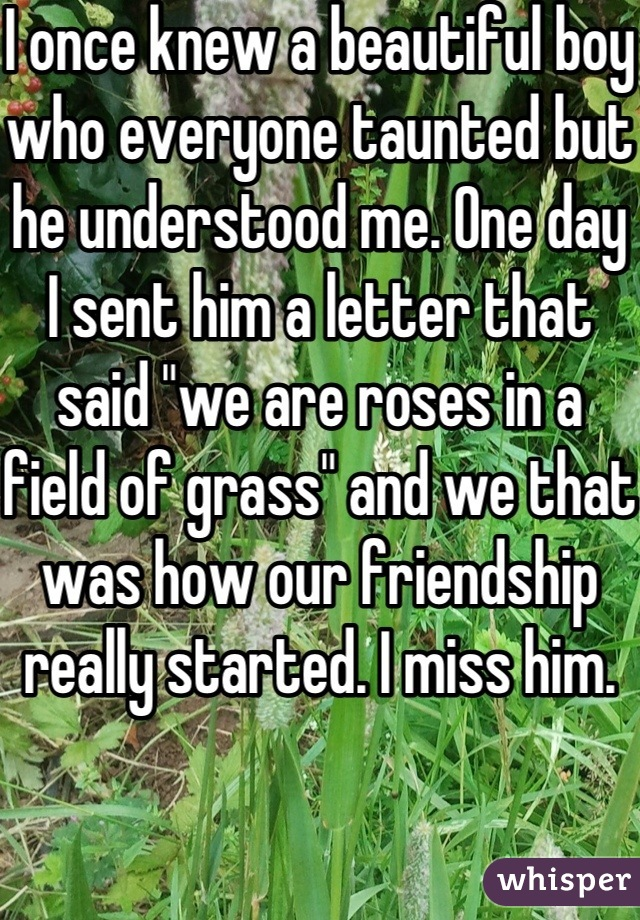 """I once knew a beautiful boy who everyone taunted but he understood me. One day I sent him a letter that said """"we are roses in a field of grass"""" and we that was how our friendship really started. I miss him."""