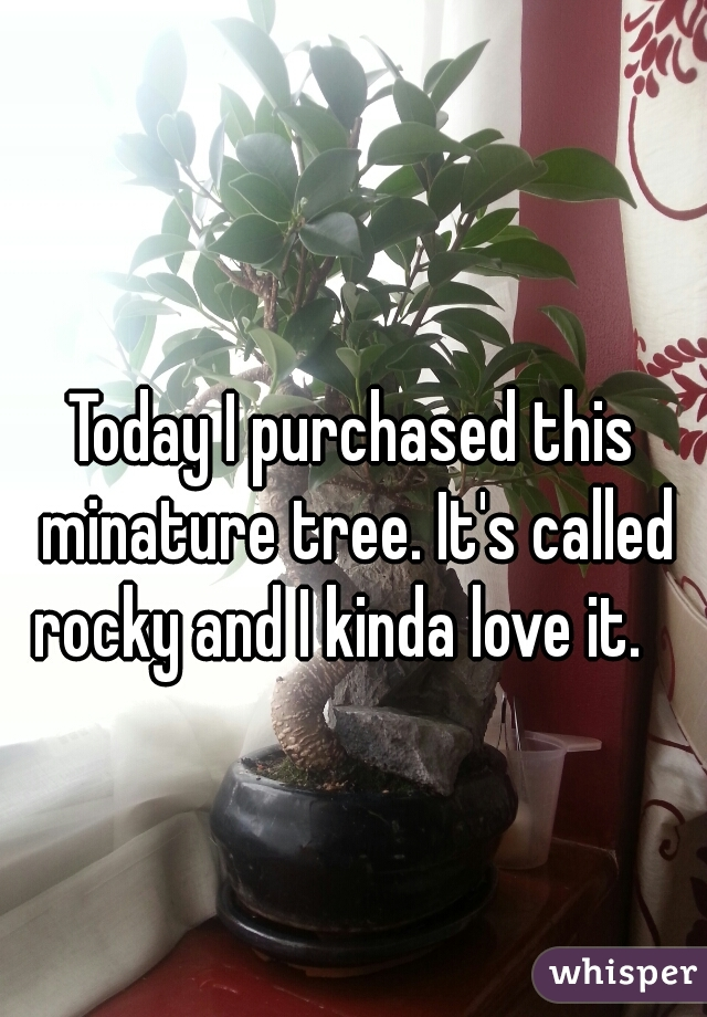 Today I purchased this minature tree. It's called rocky and I kinda love it.