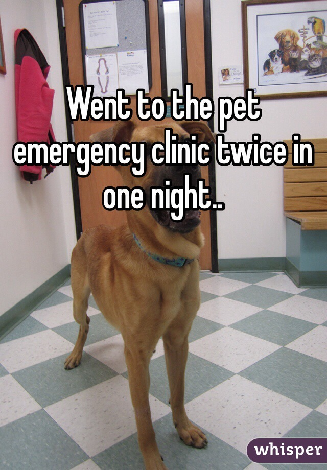Went to the pet emergency clinic twice in one night..