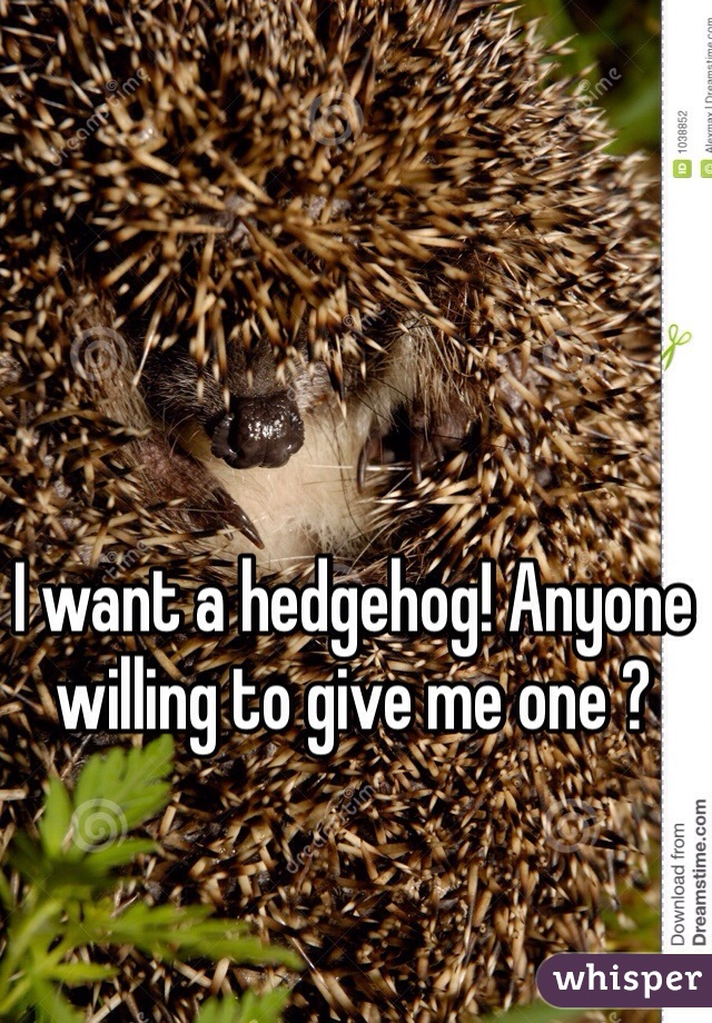 I want a hedgehog! Anyone willing to give me one ?
