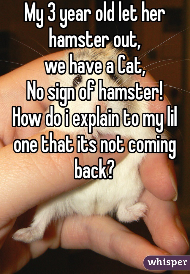 My 3 year old let her hamster out,  we have a Cat,  No sign of hamster! How do i explain to my lil one that its not coming back?
