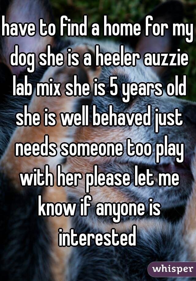 have to find a home for my dog she is a heeler auzzie lab mix she is 5 years old she is well behaved just needs someone too play with her please let me know if anyone is interested