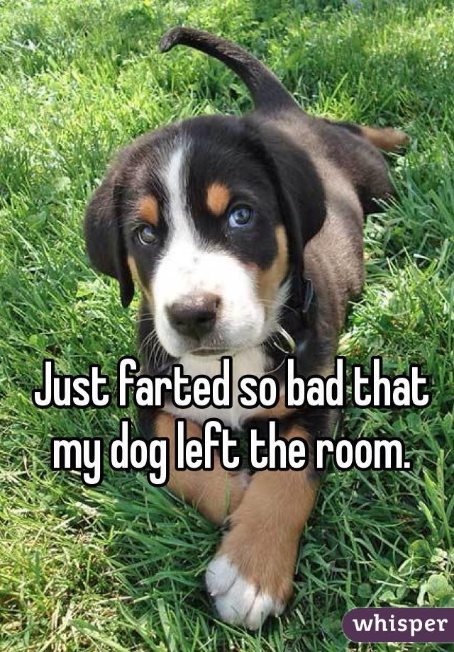 Just farted so bad that my dog left the room.