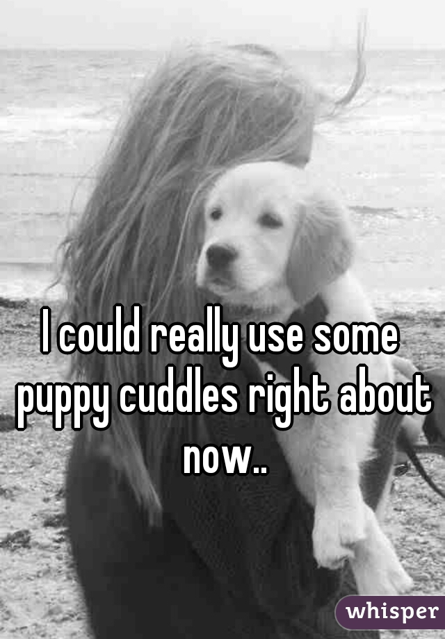 I could really use some puppy cuddles right about now..