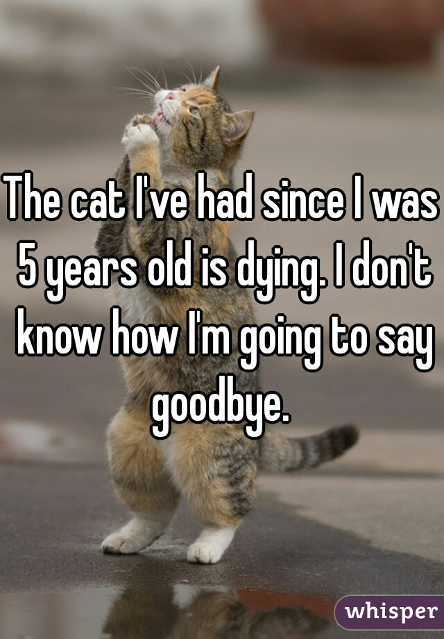 The cat I've had since I was 5 years old is dying. I don't know how I'm going to say goodbye.