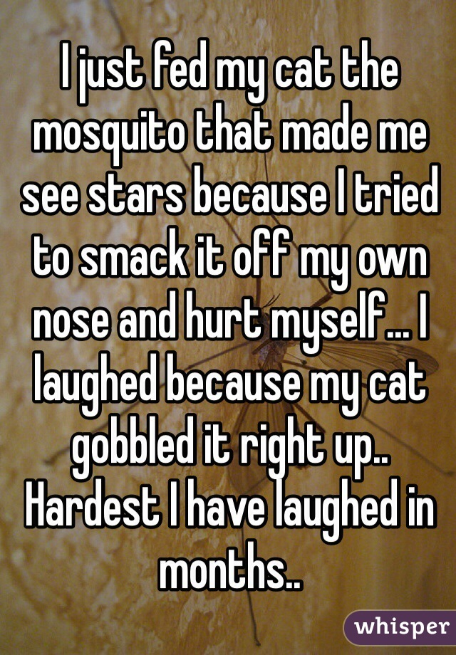 I just fed my cat the mosquito that made me see stars because I tried to smack it off my own nose and hurt myself... I laughed because my cat gobbled it right up.. Hardest I have laughed in months..