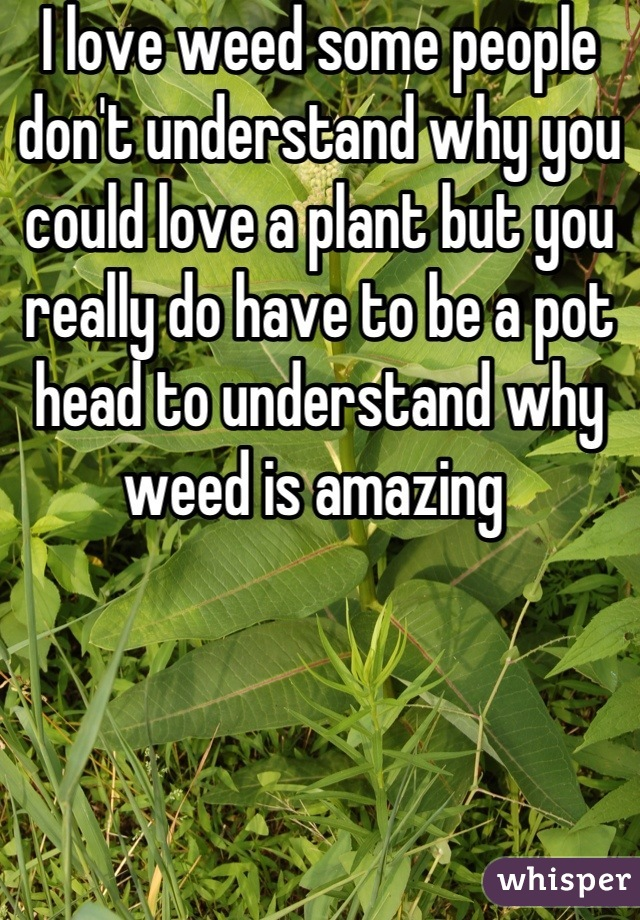 I love weed some people don't understand why you could love a plant but you really do have to be a pot head to understand why weed is amazing