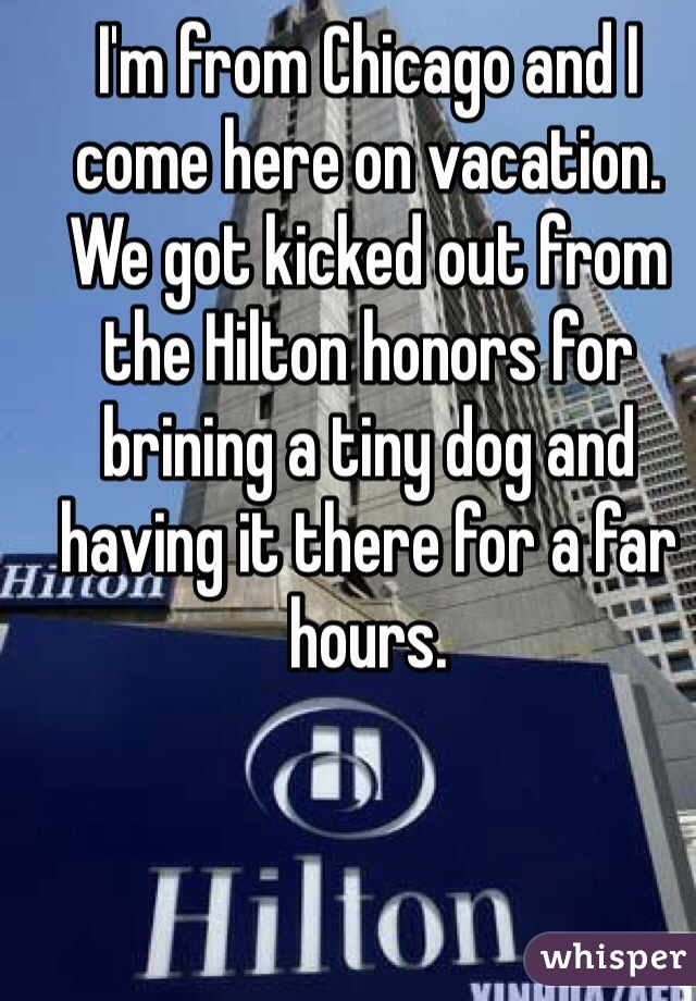 I'm from Chicago and I come here on vacation. We got kicked out from the Hilton honors for brining a tiny dog and having it there for a far hours.