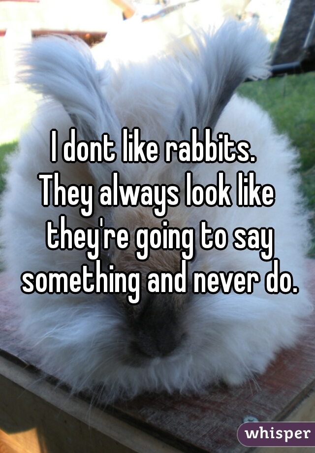 I dont like rabbits.  They always look like they're going to say something and never do.