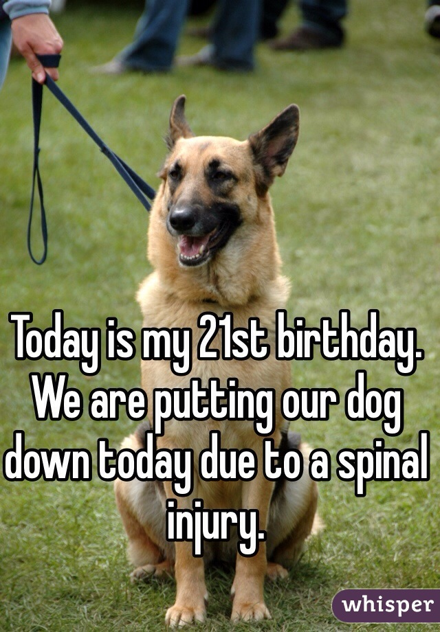 Today is my 21st birthday. We are putting our dog down today due to a spinal injury.