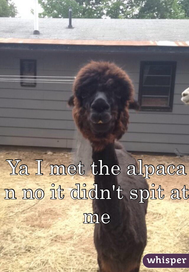Ya I met the alpaca n no it didn't spit at me