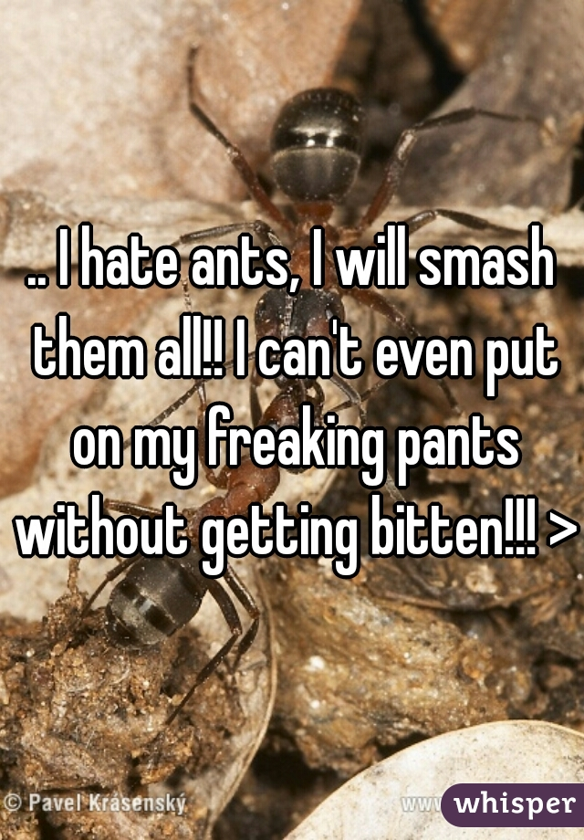 .. I hate ants, I will smash them all!! I can't even put on my freaking pants without getting bitten!!! >(