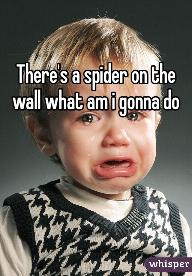 There's a spider on the wall what am i gonna do