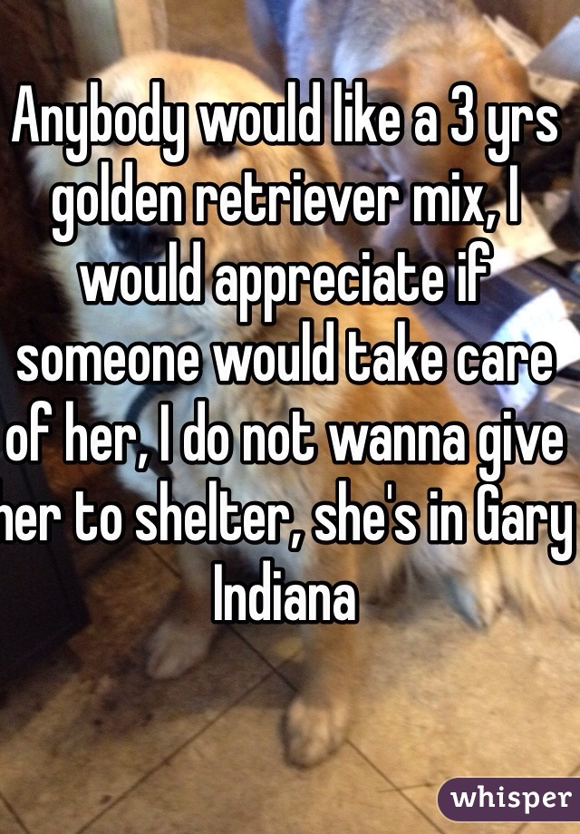 Anybody would like a 3 yrs golden retriever mix, I would appreciate if someone would take care of her, I do not wanna give her to shelter, she's in Gary Indiana