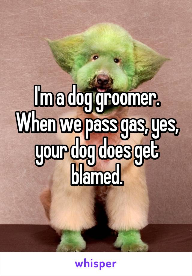 I'm a dog groomer. When we pass gas, yes, your dog does get blamed.