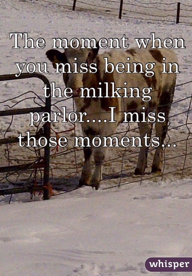 The moment when you miss being in the milking parlor....I miss those moments...