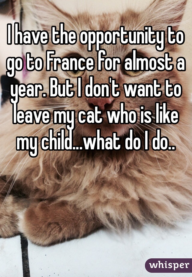 I have the opportunity to go to France for almost a year. But I don't want to leave my cat who is like my child...what do I do..