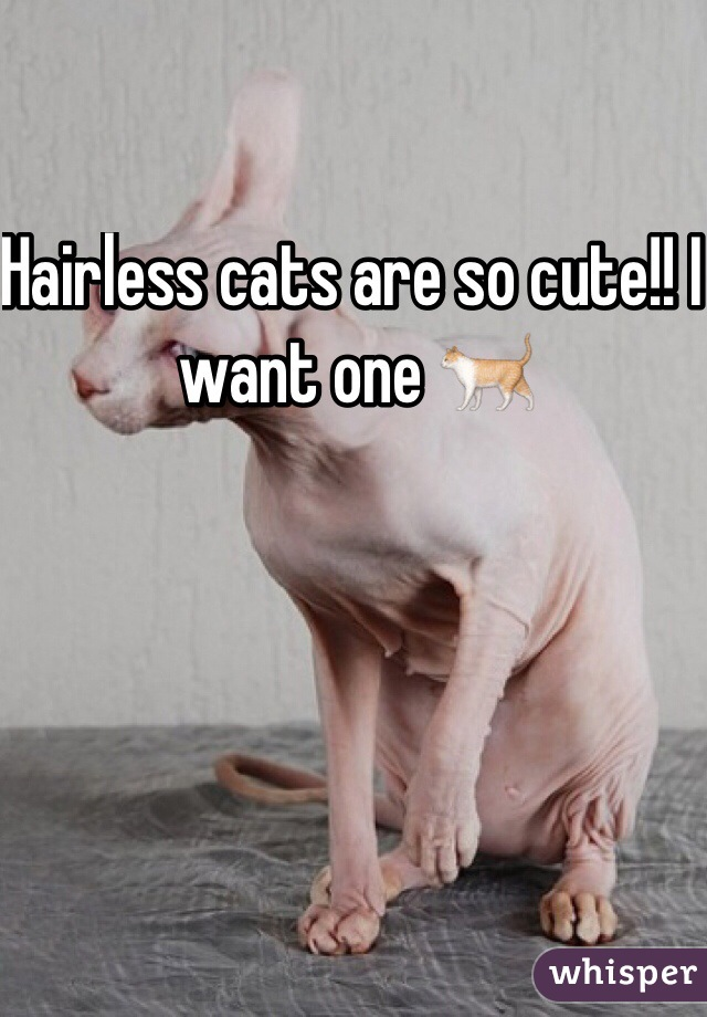 Hairless cats are so cute!! I want one 🐈