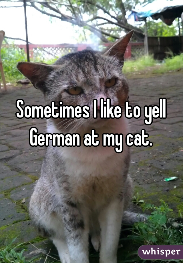 Sometimes I like to yell German at my cat.