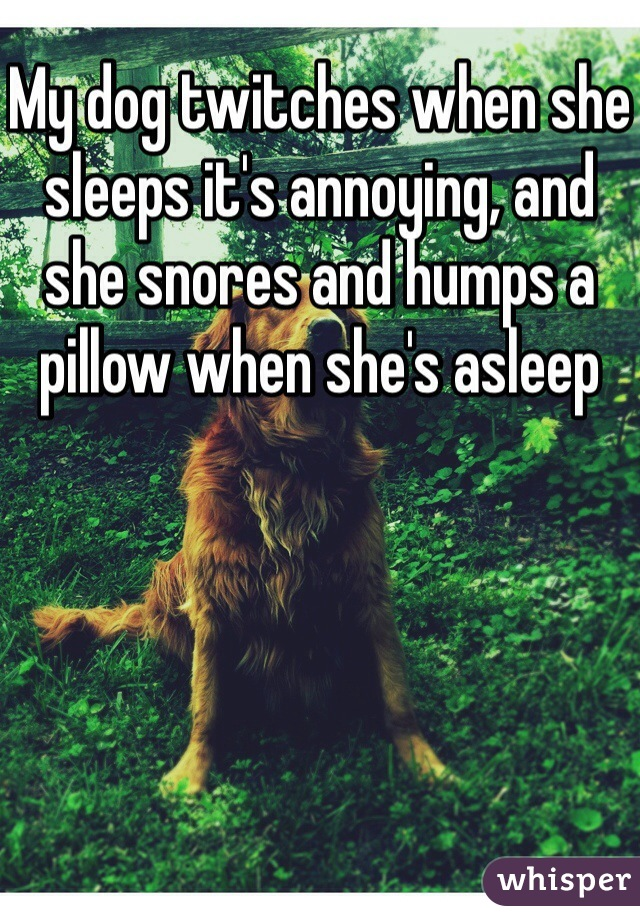 My dog twitches when she sleeps it's annoying, and she snores and humps a pillow when she's asleep
