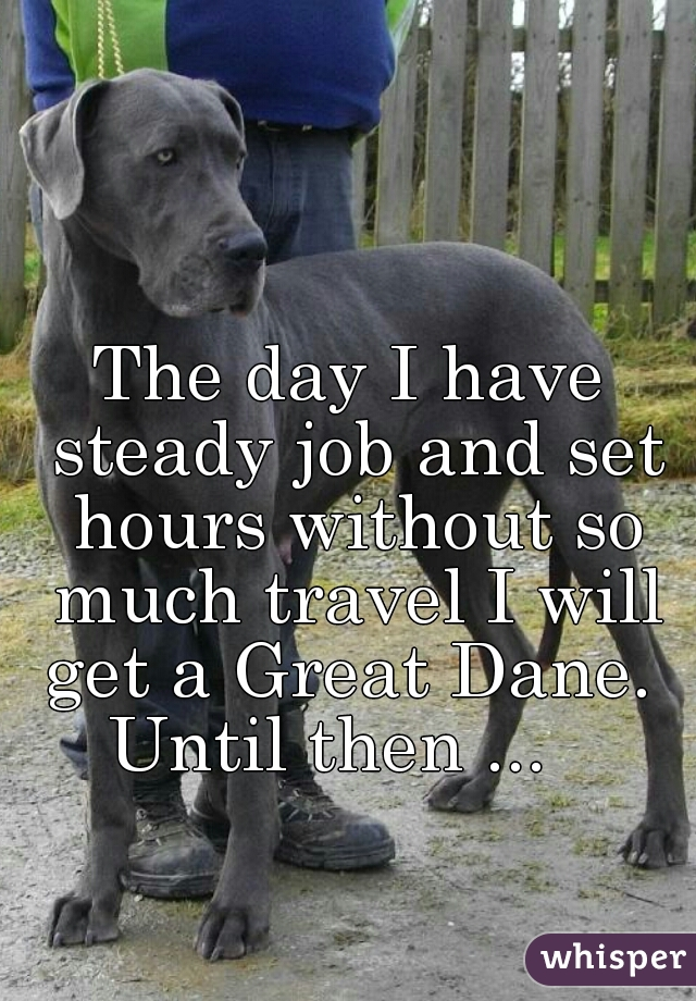 The day I have steady job and set hours without so much travel I will get a Great Dane.  Until then ...