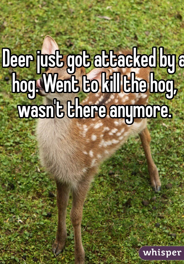 Deer just got attacked by a hog. Went to kill the hog,  wasn't there anymore.