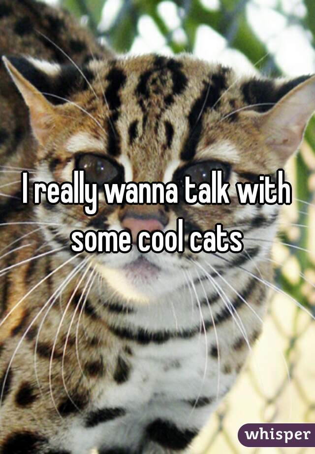 I really wanna talk with some cool cats