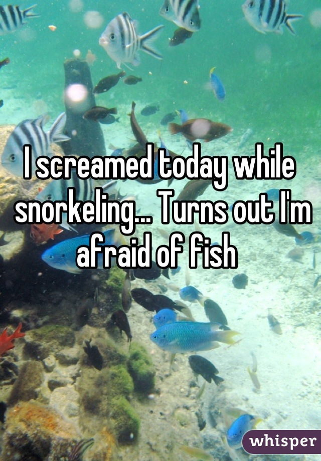 I screamed today while  snorkeling... Turns out I'm afraid of fish