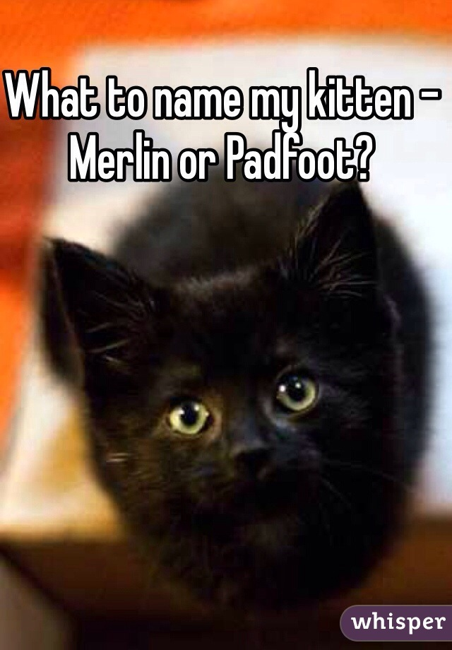 What to name my kitten -  Merlin or Padfoot?