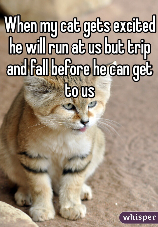 When my cat gets excited he will run at us but trip and fall before he can get to us