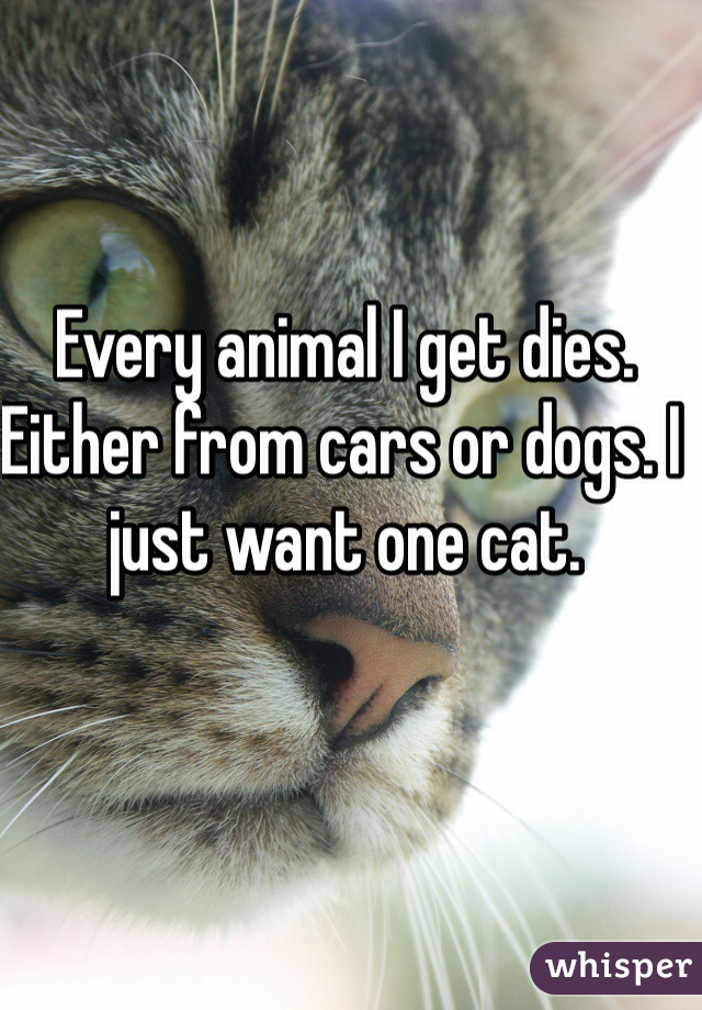 Every animal I get dies. Either from cars or dogs. I just want one cat.
