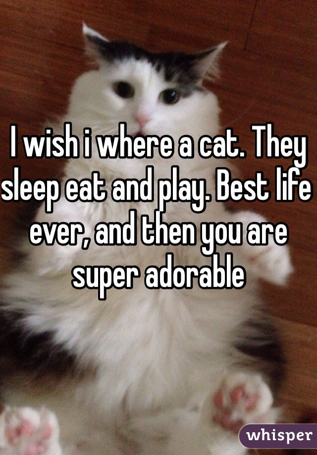 I wish i where a cat. They sleep eat and play. Best life ever, and then you are super adorable