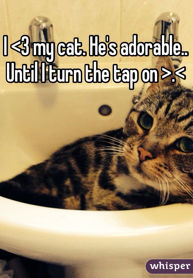 I <3 my cat. He's adorable.. Until I turn the tap on >.<