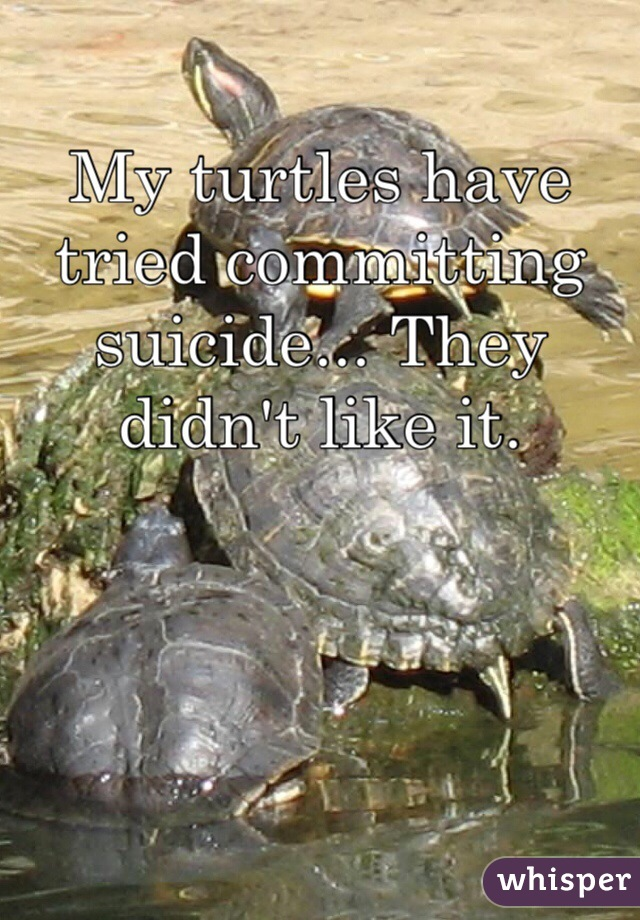 My turtles have tried committing suicide... They didn't like it.