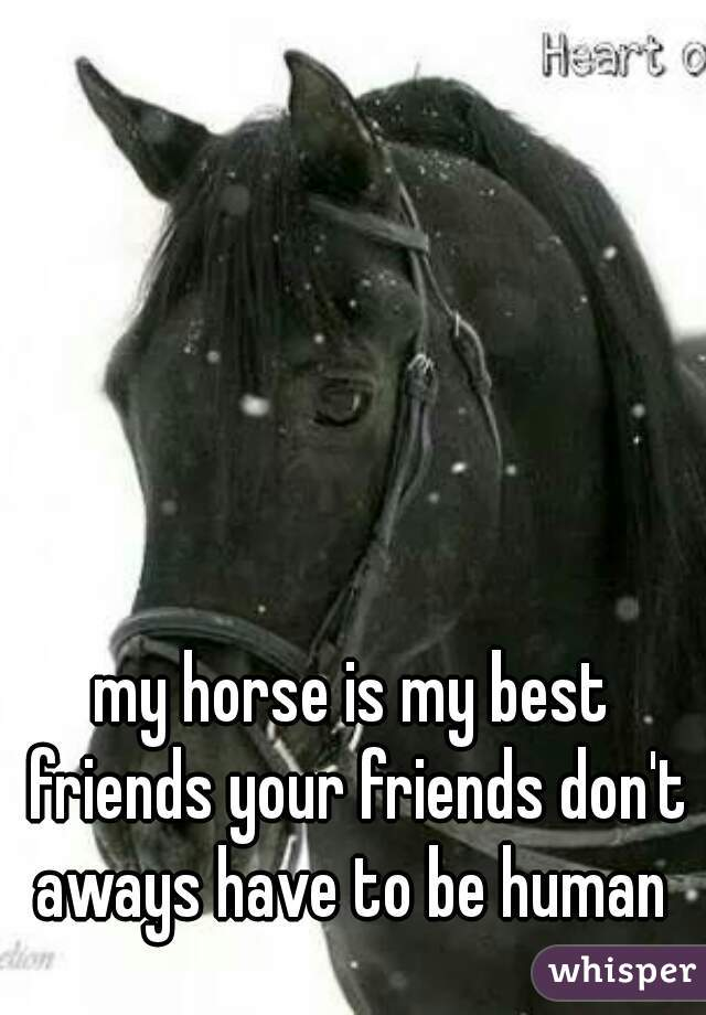 my horse is my best friends your friends don't aways have to be human