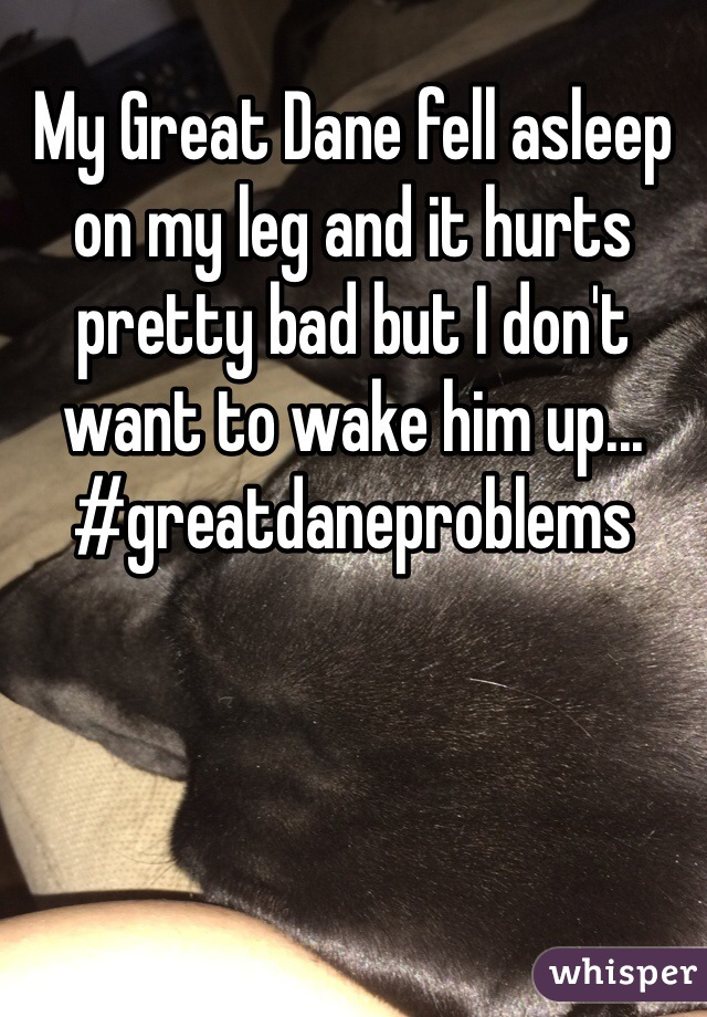 My Great Dane fell asleep on my leg and it hurts pretty bad but I don't want to wake him up...  #greatdaneproblems