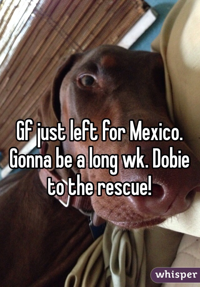 Gf just left for Mexico. Gonna be a long wk. Dobie to the rescue!