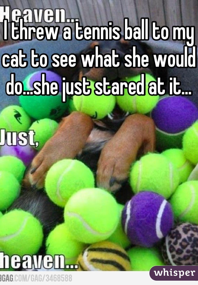 I threw a tennis ball to my cat to see what she would do...she just stared at it...